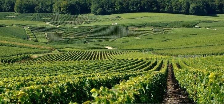 terroir-et-une-vigne-d-exception-champagne