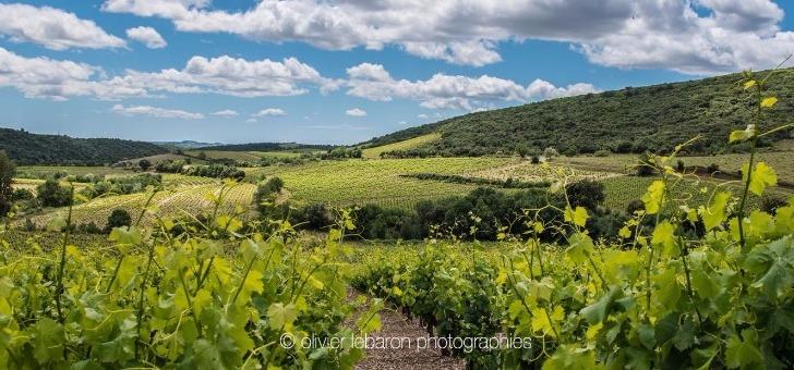 vignes-de-schiste