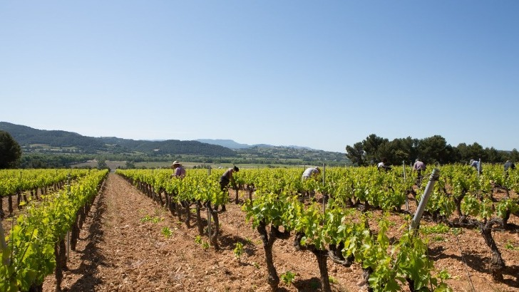 image-prop-contact-domaine-jaume