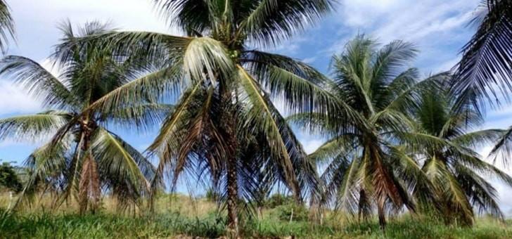 ecoidees-aux-philippines-pour-produits-a-base-de-noix-de-coco
