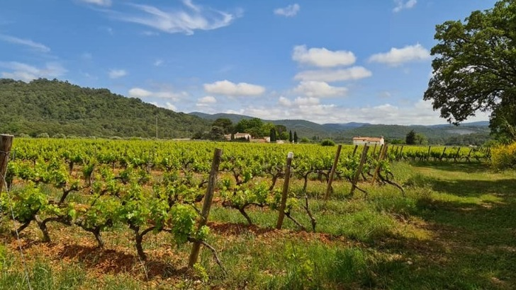 vins-alcools-domaine-chateau-deffends-a-carnoules
