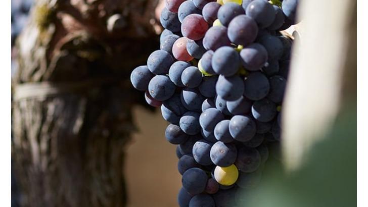 vignobles-k-met-a-honneur-patrimoine-viticole-bordelais