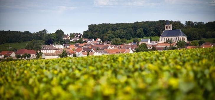 maison-brun-de-neuville-150-hectares-de-vignes