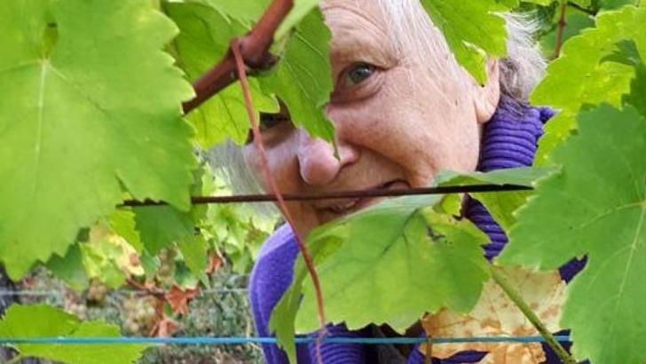 un-domaine-viticole-situe-a-gueberschwihr-p