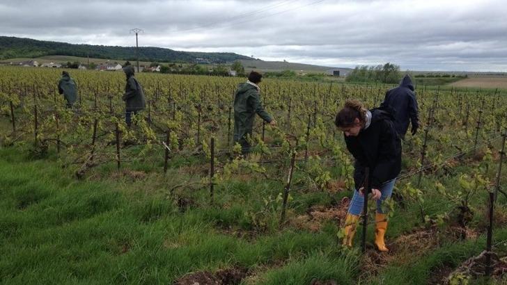 champagne-g-boutillez-vignon-une-viticulture-respectueuse-de-environnement