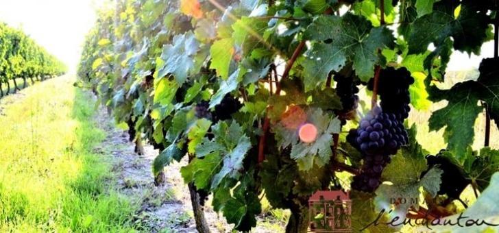 des-vignes-pleine-forme