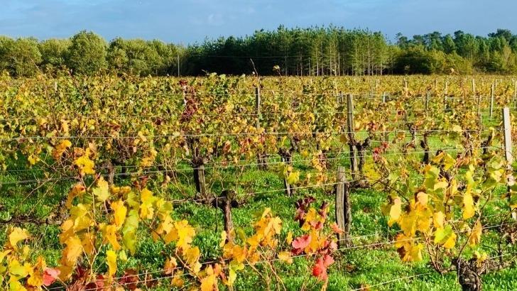 au-domaine-bonabaud-vignes-sont-cultivees-selon-une-demarche-agro-ecologique-et-responsable