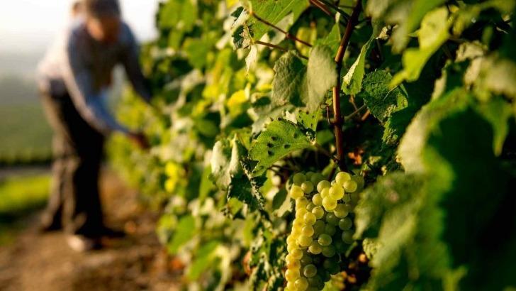 champagne-forest-marie-a-trigny-fierte-d-etre-vigneron-independant