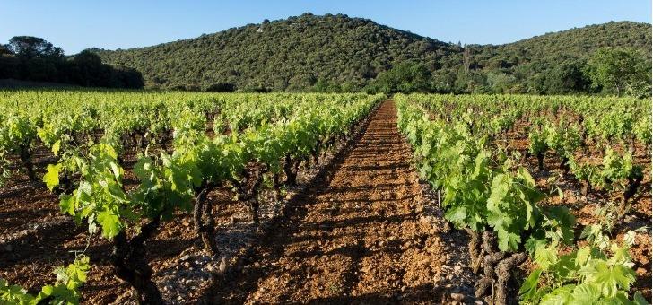 paysage-caracteristique-sur-route-des-vins-du-duche-d-uzes