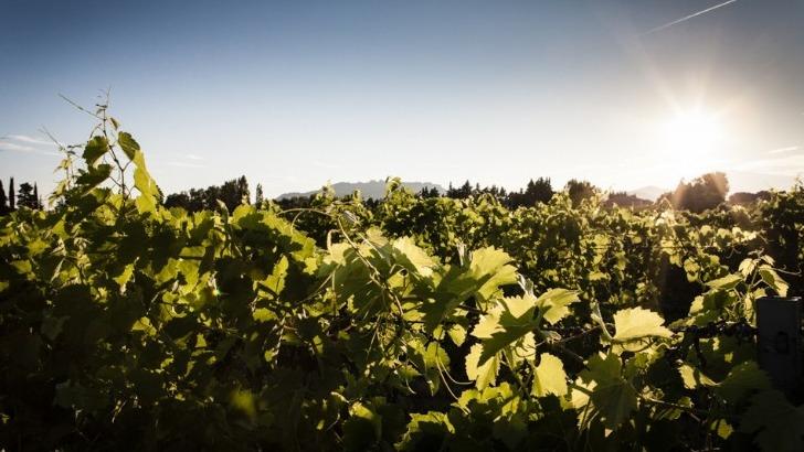 domaine-de-brunely-elabore-des-vins-puissants-allient-equilibre-et-finesse