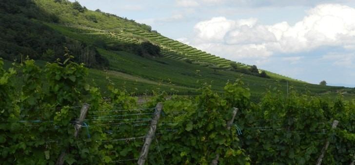 de-naissent-des-vins-d-exception