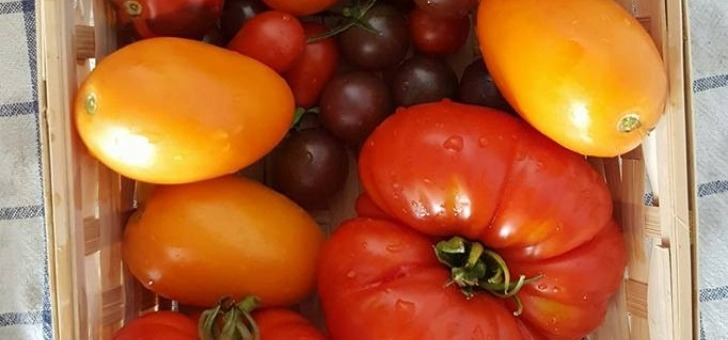 cueillette-urbaine-des-fruits-et-legumes-de-saison-attendent