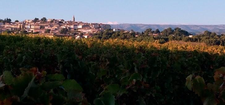 vue-sur-vignes-et-village-au-fond