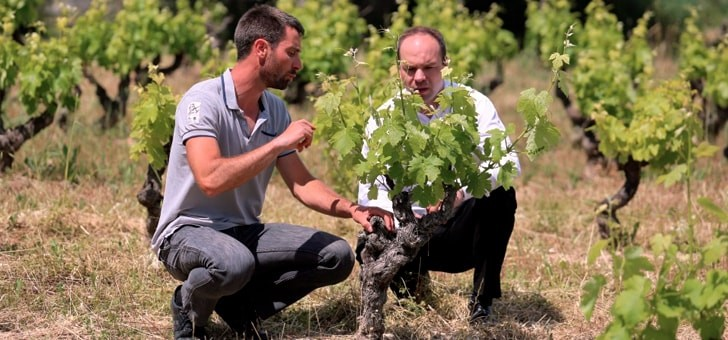 vignes-meritent-une-attention-particuliere