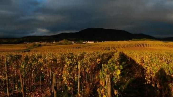 domaine-herr-une-propriete-viticole-situee-alsace-a-getwiller