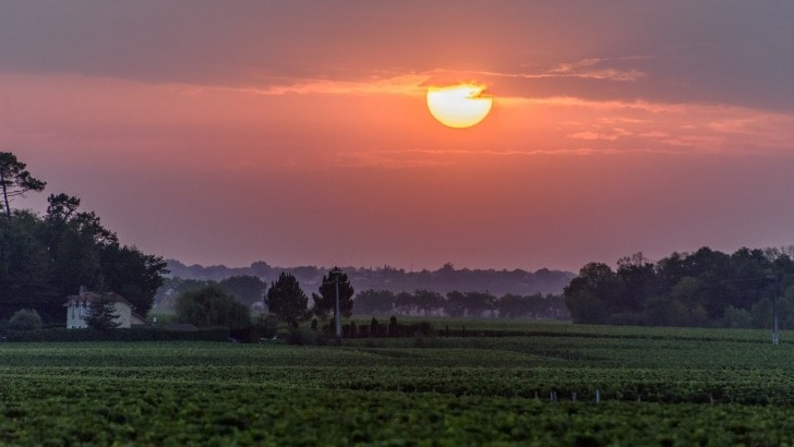couche-de-soleil-sur-vignoble