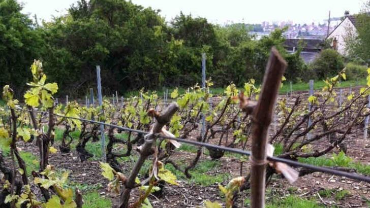 champagne-didier-raimond-a-epernay-moins-d-interventions-physiques-et-chimiques-possible-pour-favoriser-qualite-des-vins
