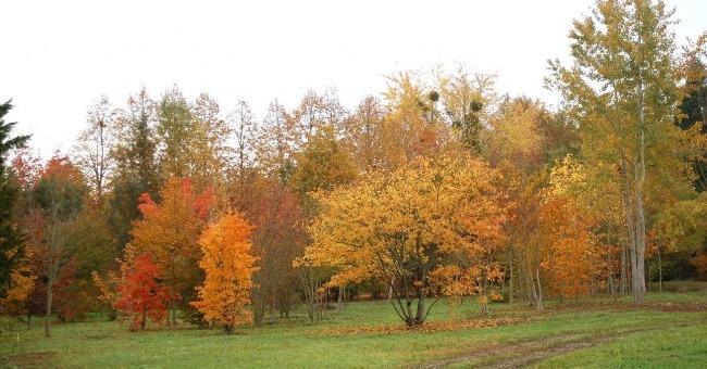 arboretum-adeline-a-chapelle-montlinard
