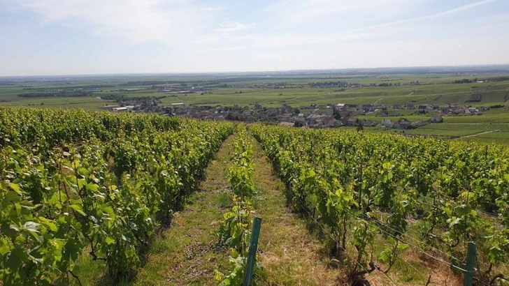 vins-alcools-domaine-champagne-chapuy-a-oger