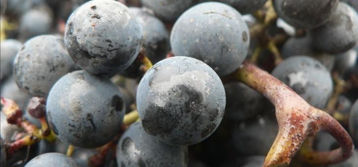 propriete-produit-du-merlot-du-cabernet-franc-et-du-cabernet-sauvignon