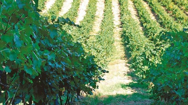 vins-alcools-domaine-domaine-vecchio-a-chiatra