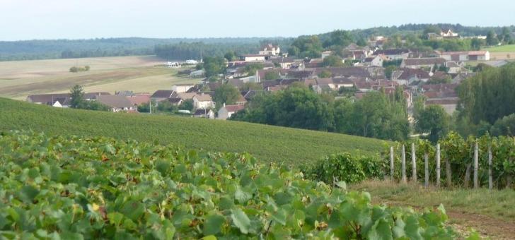 vignes-du-champagne-rollin-visite-oenologie-et-vente-directe-a-propriete