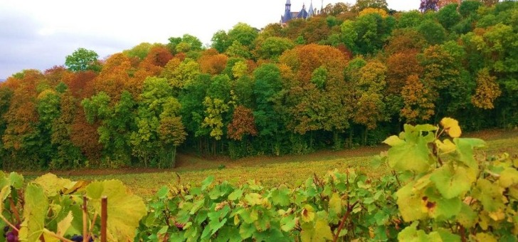 vignoble-entoure-chateau-de-boursault