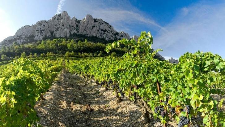 domaine-des-espiers-compte-9-5-hectares-de-vignes-eleves-dans-tradition