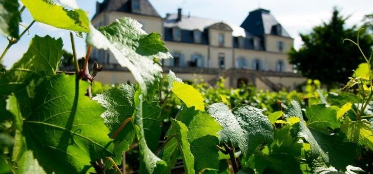chateau-citeaux-lacueillette-vignes-meursault