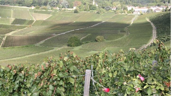 champagne-vincent-bliard-un-domaine-puise-dans-techniques-traditionnelles-transmises-de-generation-generation