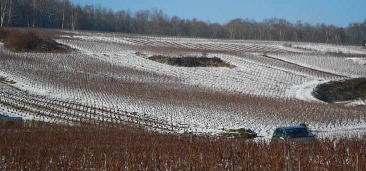 vignes-parent-d-une-belle-robe-blanche-h