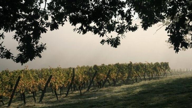 passion-de-vignerons-transmise-de-pere-fils