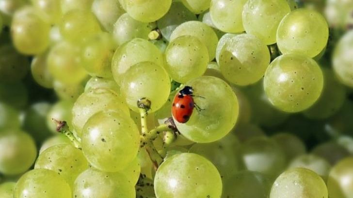 une-viticulture-a-haute-valeur-environnementale