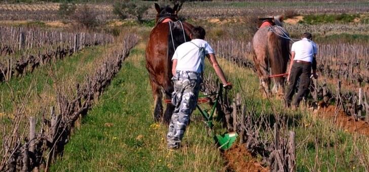 labourage-au-cheval-pour-preserver-sol