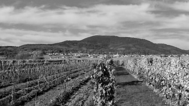 domaine-herr-propose-plusieurs-vins