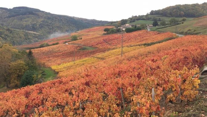 domaine-familial-situe-sur-hauteurs-au-nord-du-vignoble-beaujolais