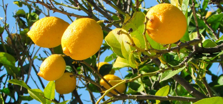pressoirs-de-provence-decouvrez-de-savoureux-melanges-a-base-de-citron