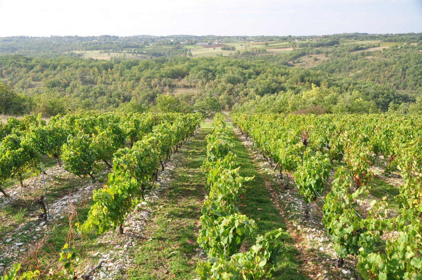 roques-de-cana-des-vignes-epanouies-a-origine-de-vins-frais-et-mineraux