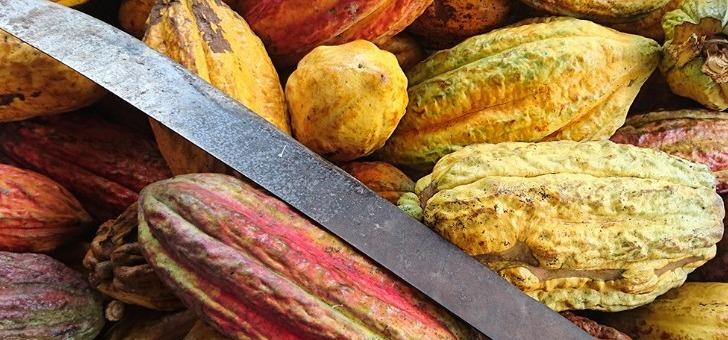 kaoka-du-cacao-aromatique-de-grands-crus