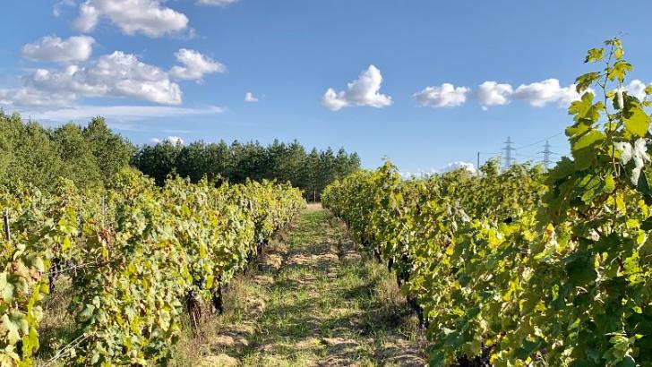 terroir-du-domaine-bonabaud-est-largement-sablonneux-contribuant-a-finesse-des-vins-fins