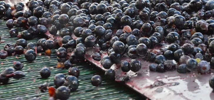 raisin-est-trie-grace-a-une-table-optique
