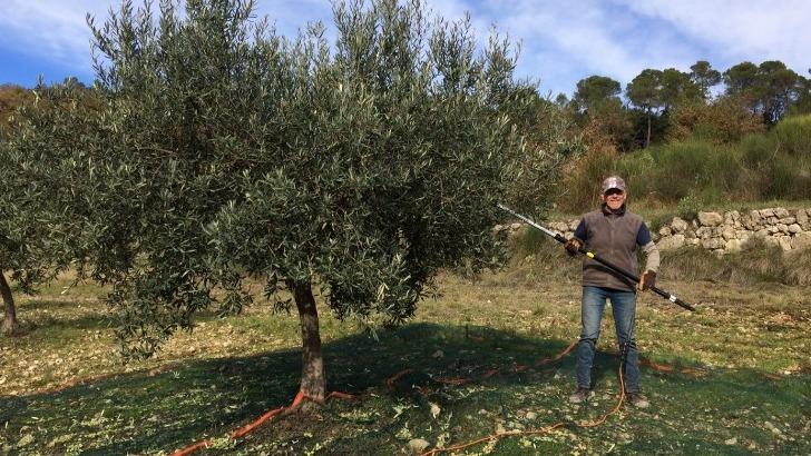 recolte-des-olives-au-chateau-de-lagarde