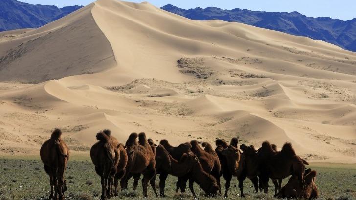 horseback-mongolia-chameaux-devant-dunes-de-khongor-eleves-par-eleveurs-mongols-notamment-dans-sud-gobi-et-ouest-du-pays