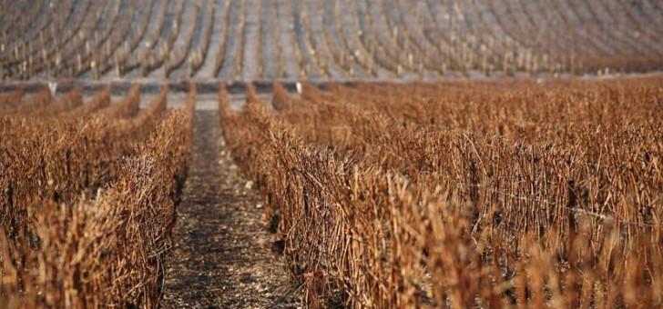 vignes-implantees-sur-vallee-de-marne