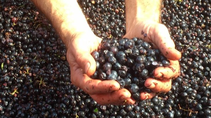 terroir-du-chateau-noble-est-favorable-au-bon-developpement-des-raisins
