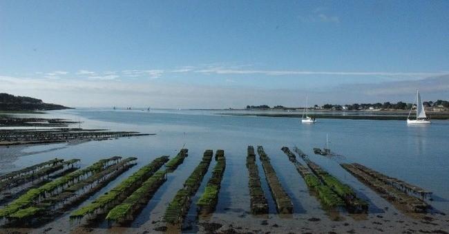 secrets-de-huitre-a-trinite-sur-mer