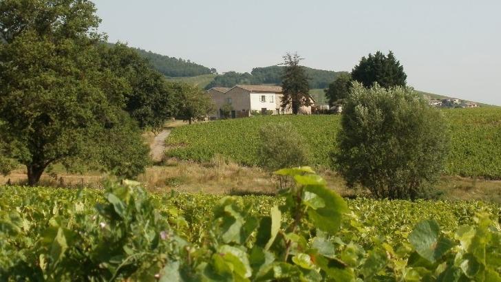 domaine-romain-jambon-une-aventure-commence-2010-a-reprise-d-un-domaine-brouilly-sur-terroirs-de-odenas-et-charentay