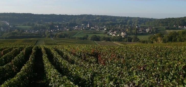 un-terroir-aoc-champagne-un-savoir-faire