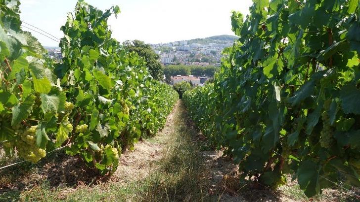 champagne-didier-raimond-a-epernay-viticulture-raisonnee-comme-strategie-de-preservation-de-environnement
