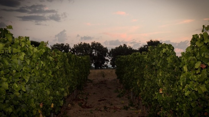 domaine-de-navicelle-une-viticulture-certifiee-bio